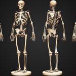 Trong cơ thể người có bao nhiêu xương tất cả